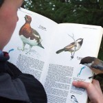 A Bird Landed On A Page Dedicated To It.