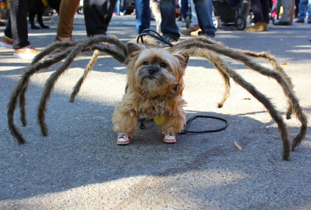 Halloween Costumes5