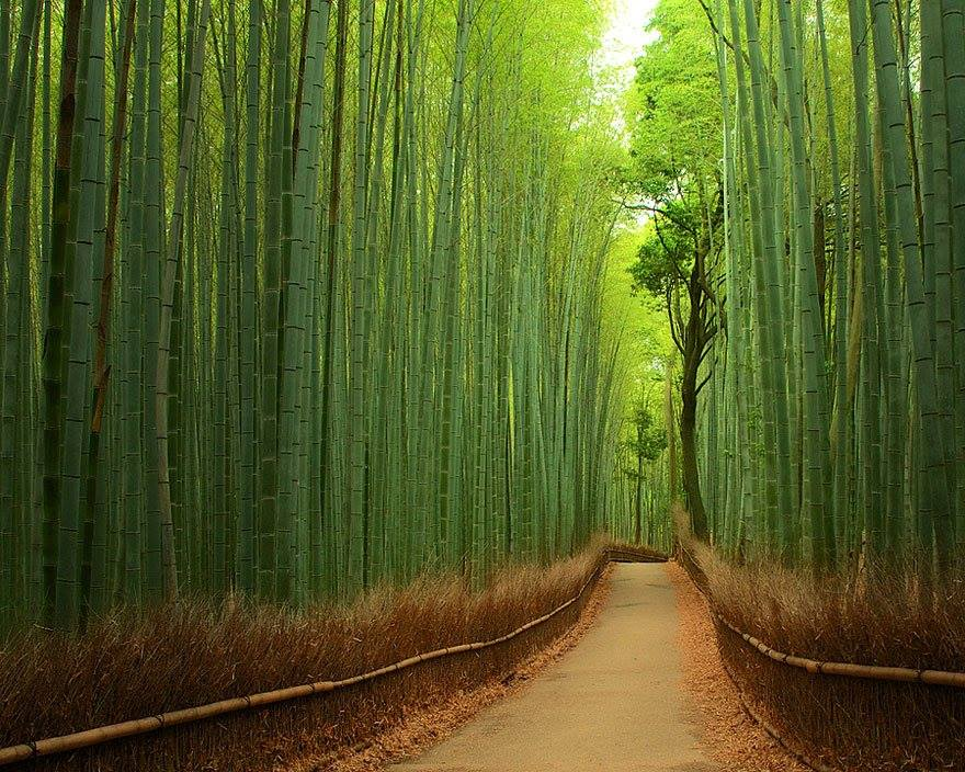 Wonderful Paths In The World3