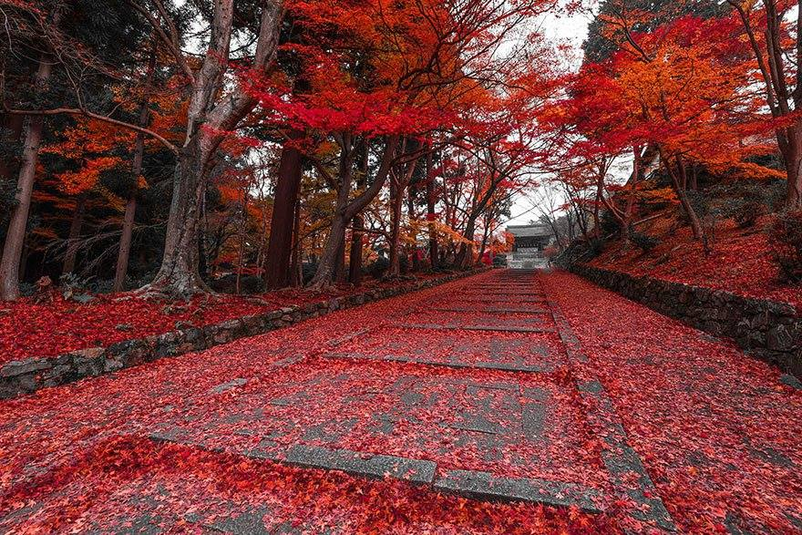 Wonderful Paths In The World5