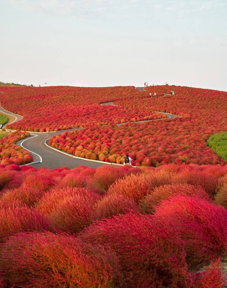Wonderful Paths In The World6