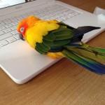 You say $2000 Facebook machine, I say $2000 bird warmer!