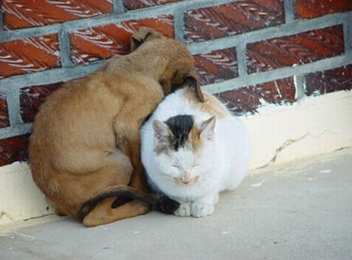 cat_and_dog1