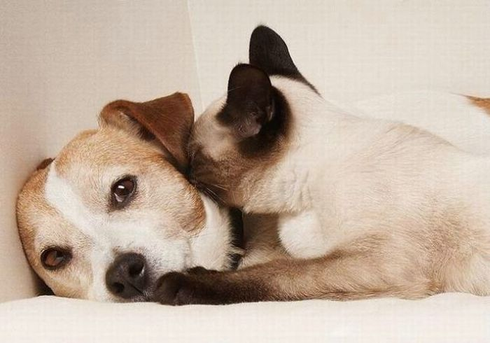 cat_and_dog2