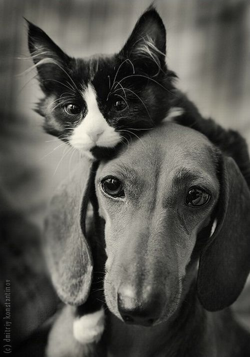 cat_and_dog3