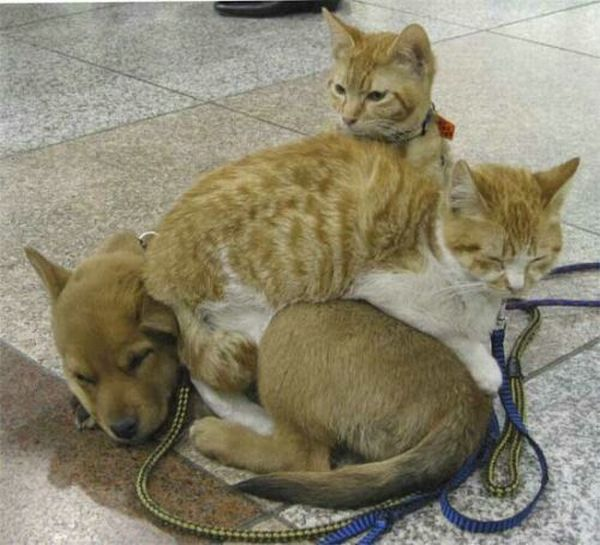 cat_and_dog5