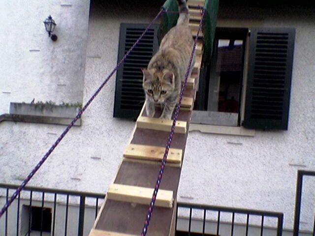 cat_ladders6