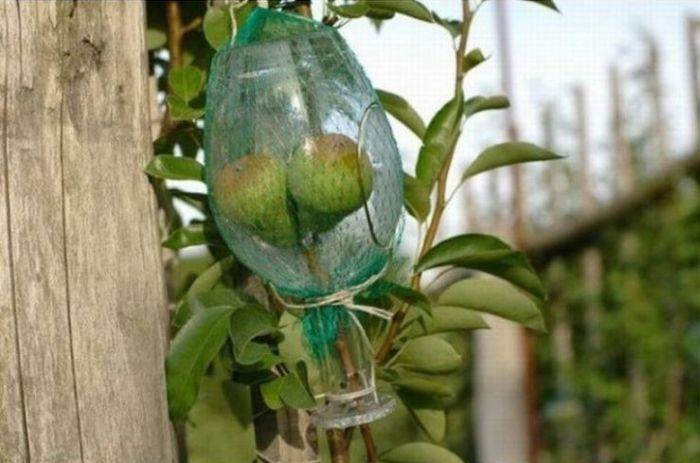 fruit_bottle3
