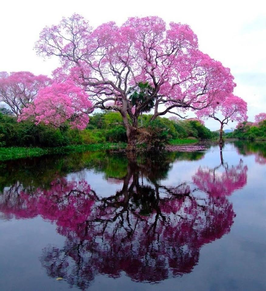 beautiful reflections5