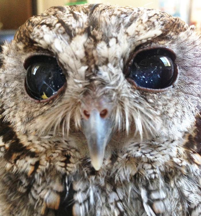 blind owl2