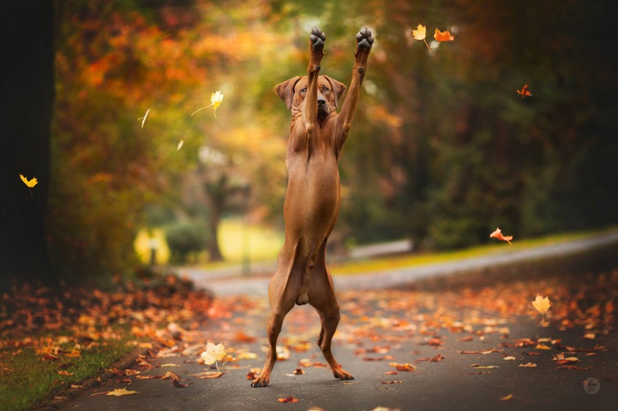 fall animals2