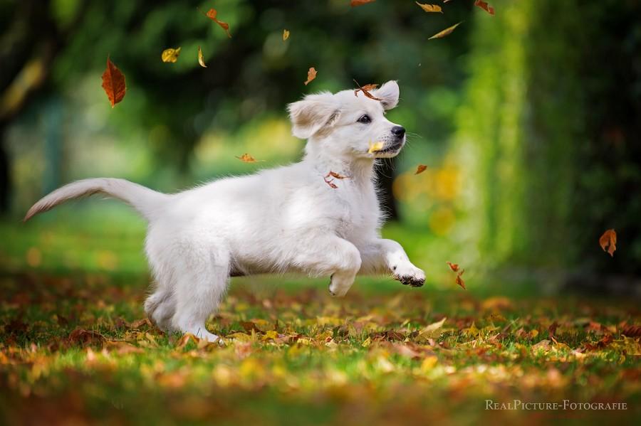 fall animals4