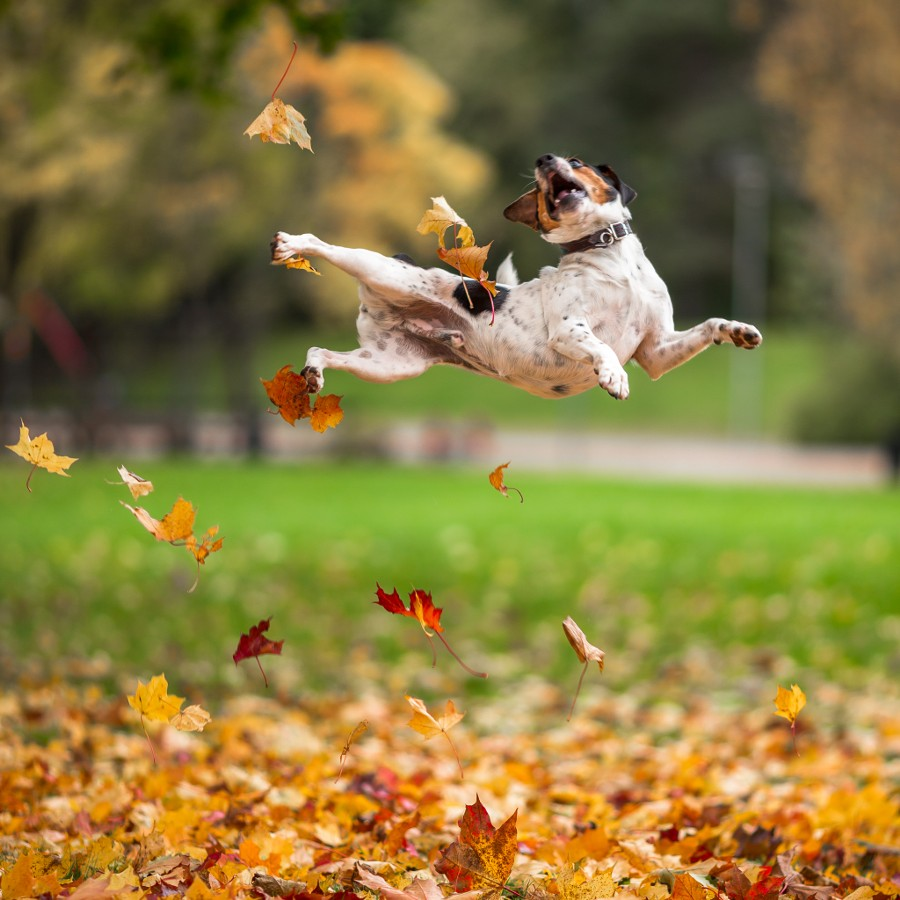 fall animals8