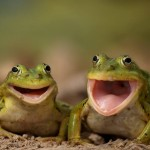 Animals Laughing