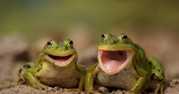 Animals Laughing