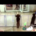 This Dog Dance Better Than You?