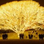 Outdoor Tree Lighting
