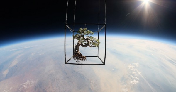Artist Launches Bonsai Trees Into Space