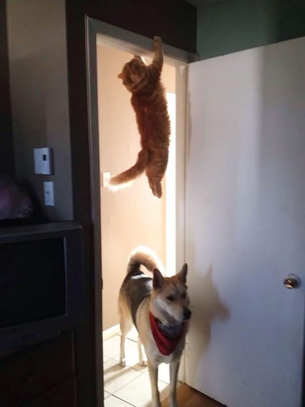 ninja cats2