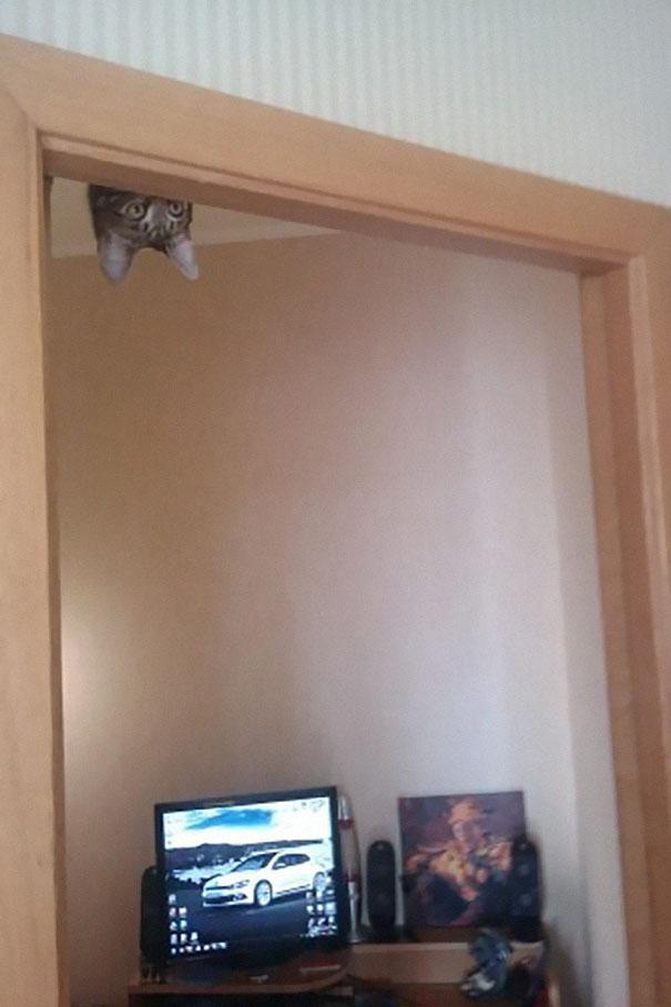 ninja cats8