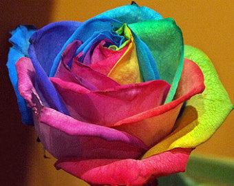 rare roses5