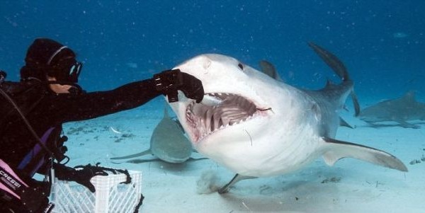 Inside The Mouth Of A Shark
