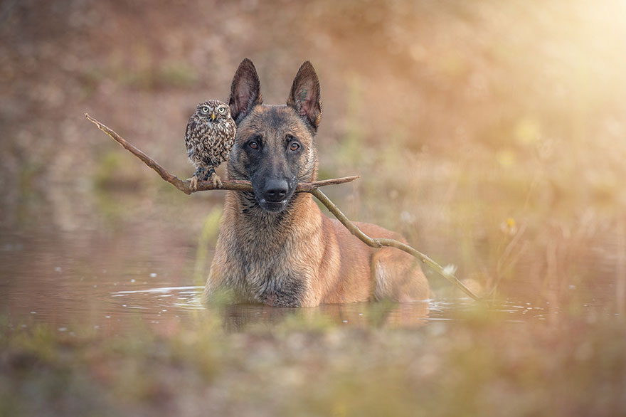 The Unlikely Friendship Of A Dog And An Owl2
