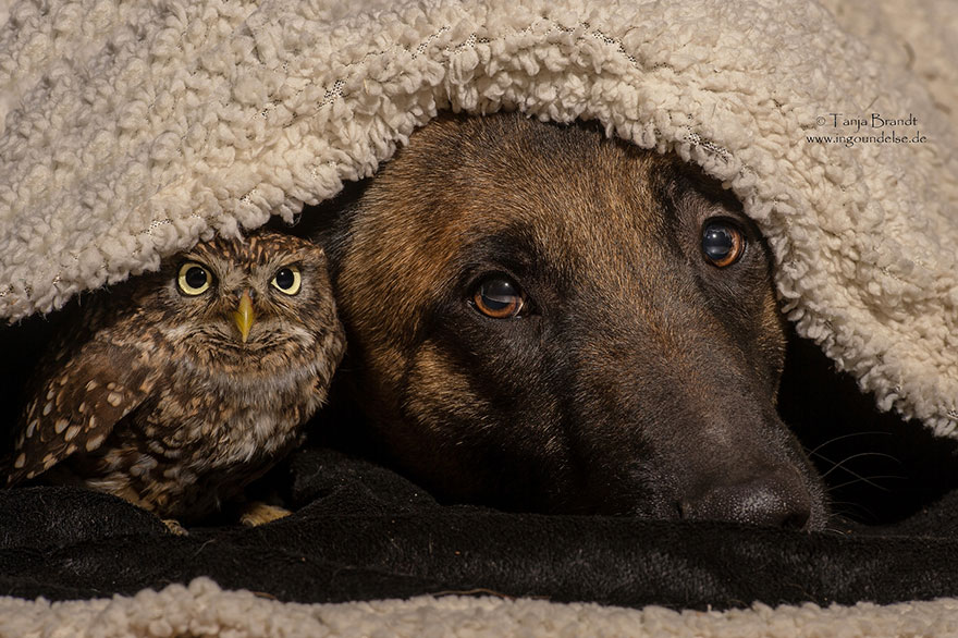 The Unlikely Friendship Of A Dog And An Owl3