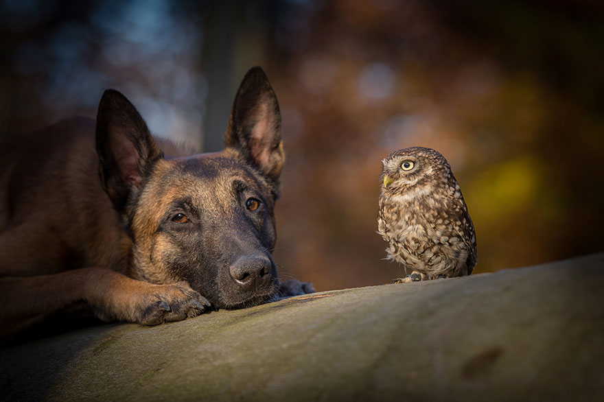 The Unlikely Friendship Of A Dog And An Owl4