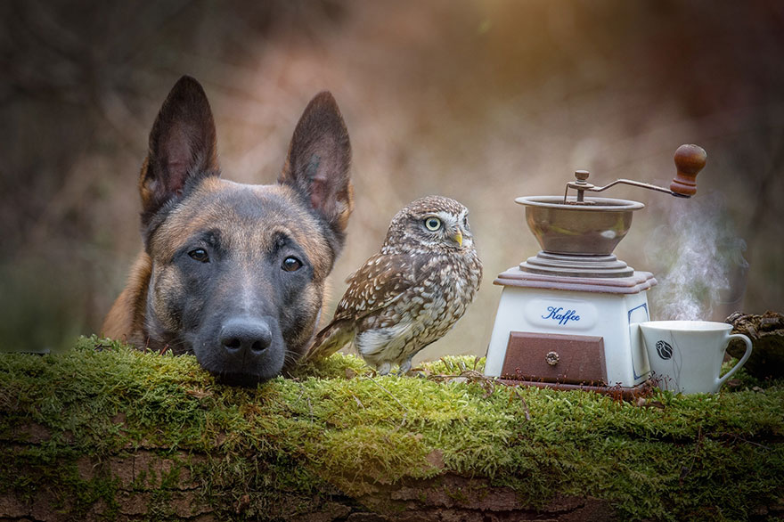 The Unlikely Friendship Of A Dog And An Owl5