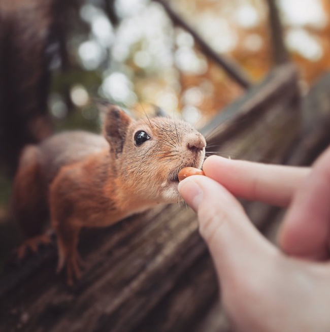 extraordinarily close-up images of animals5