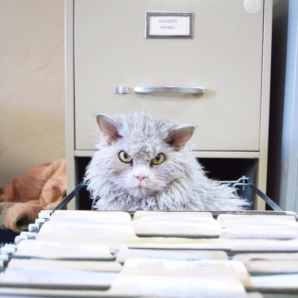 Is This The New Grumpy Cat