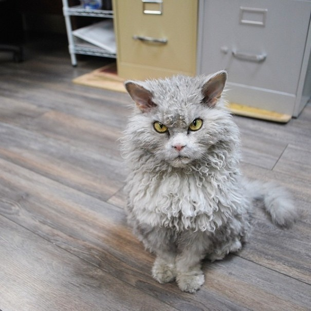 Is This The New Grumpy Cat3