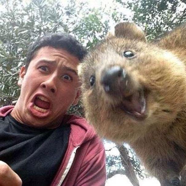 Quokka Selfie, Australia