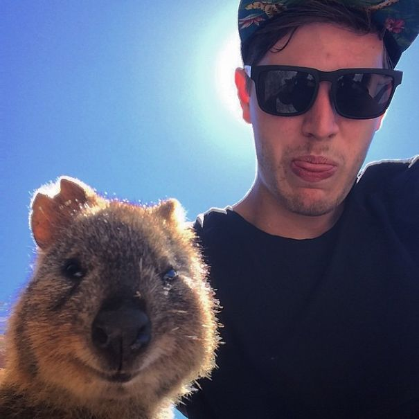 Quokka Selfie, Australia6
