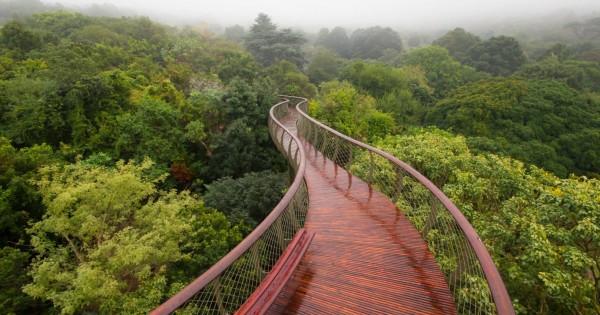 Treetop Walkway, South Africa