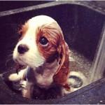 Her First Bath