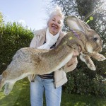 The World's Biggest Bunny
