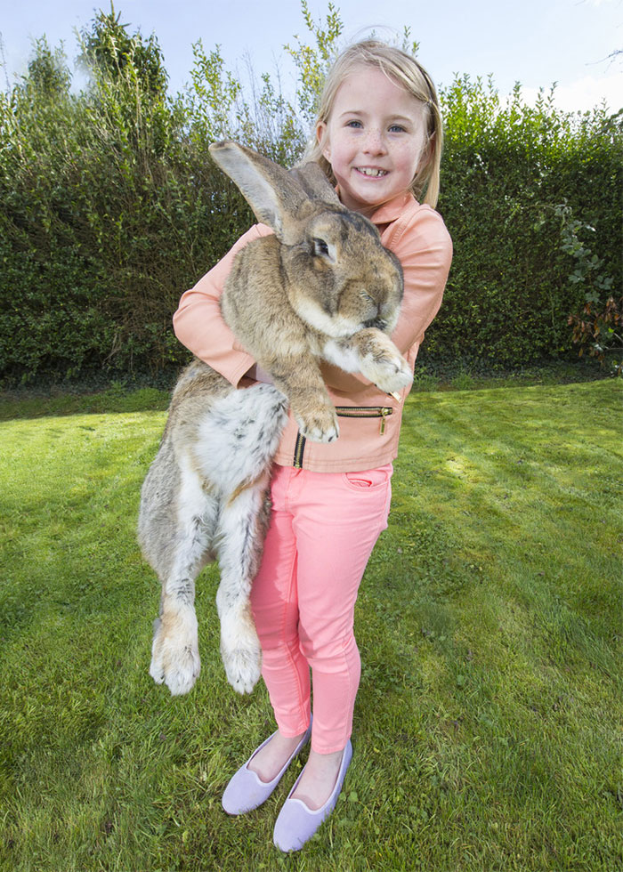 The World's Biggest Bunny2