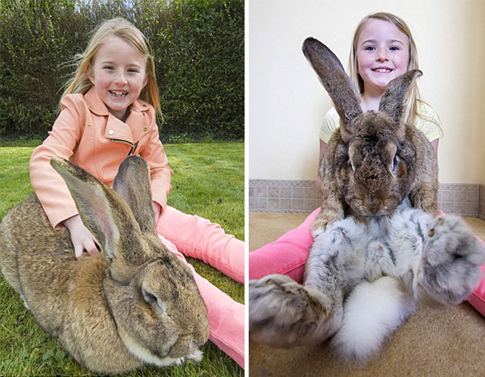 The World's Biggest Bunny4