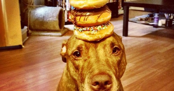 The Dog With The Most Self Control In The World