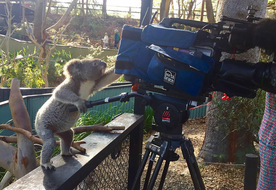 Animals That Want To Be Photographers3