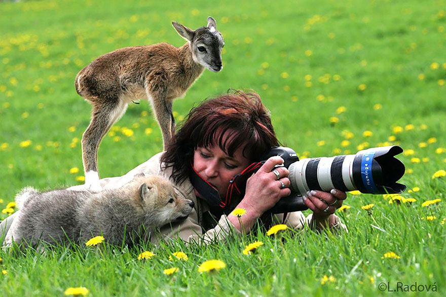 Animals That Want To Be Photographers4