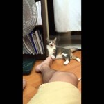 Cat Reacts Hilariously To Guy's Smelly Feet