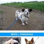 Dog Cross-Breeds