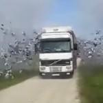 Release The Birds