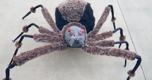 Crazy Giant Spider Prank